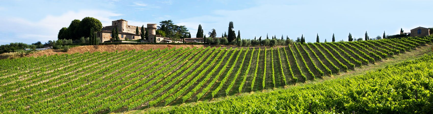 Chianti, Tuscany: view of a vineyard